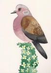 Artist helps save threatened turtle dove