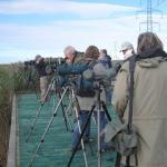 Trip Report – Rainham Marshes – Sunday 17th October