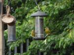Bird Safari at Millbrook Garden Centre