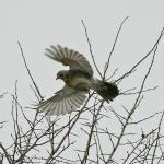 Rainham Marshes 12th February 2012