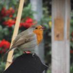 Millbrook - Big Garden Birdwatch - Day 1