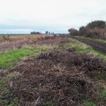 Volunteering Day at RSPB Northward Hill