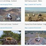 Osprey Nest cams from around the UK