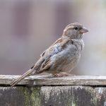 Gravesend Garden Birdwatch