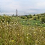Save Swanscombe Marshes