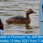 """Jeff Blincow online talk """"Wildlife in Finnmark"""" - tickets available now"""