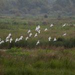 Group Trip to RSPB Rainham Marsh